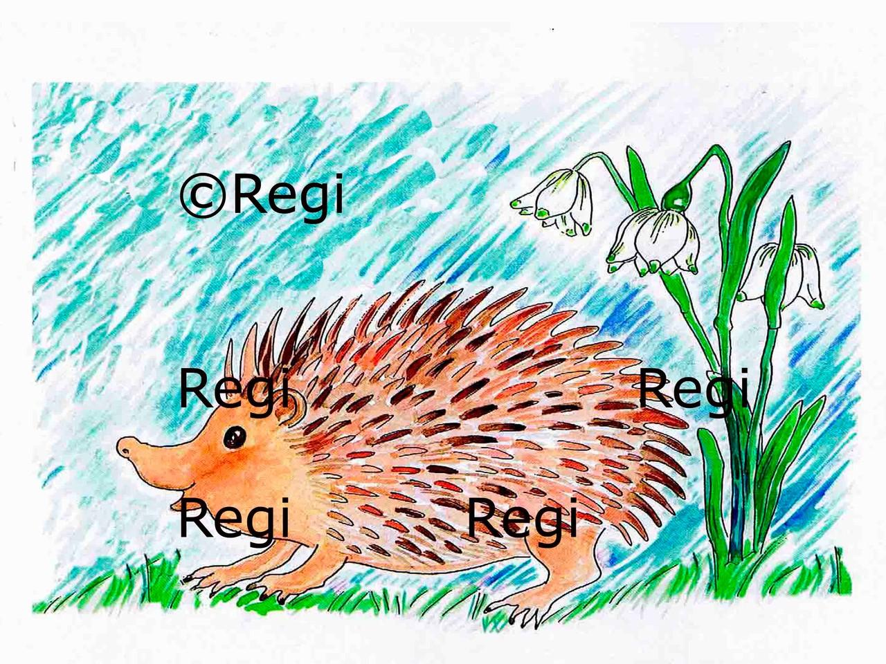 Der Igel Isidor  Isidor, the Hedgehog  Regula Murmann