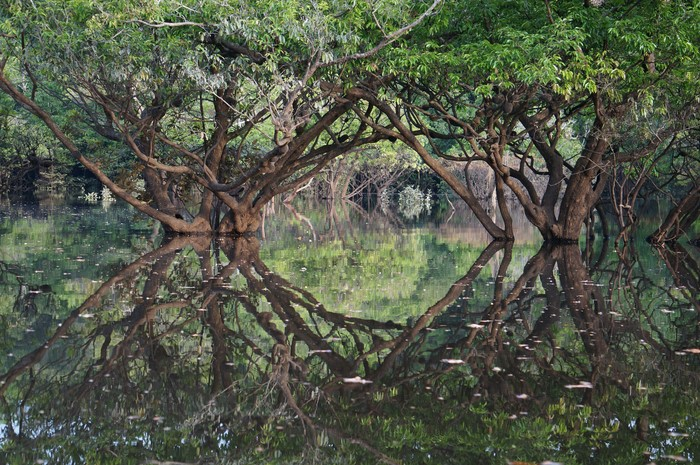 Regenwald, Rio Negro
