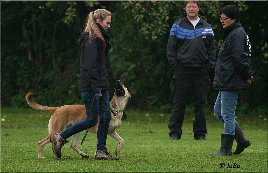 """""""Blindenhund"""" Hella mit Janina Krank"""