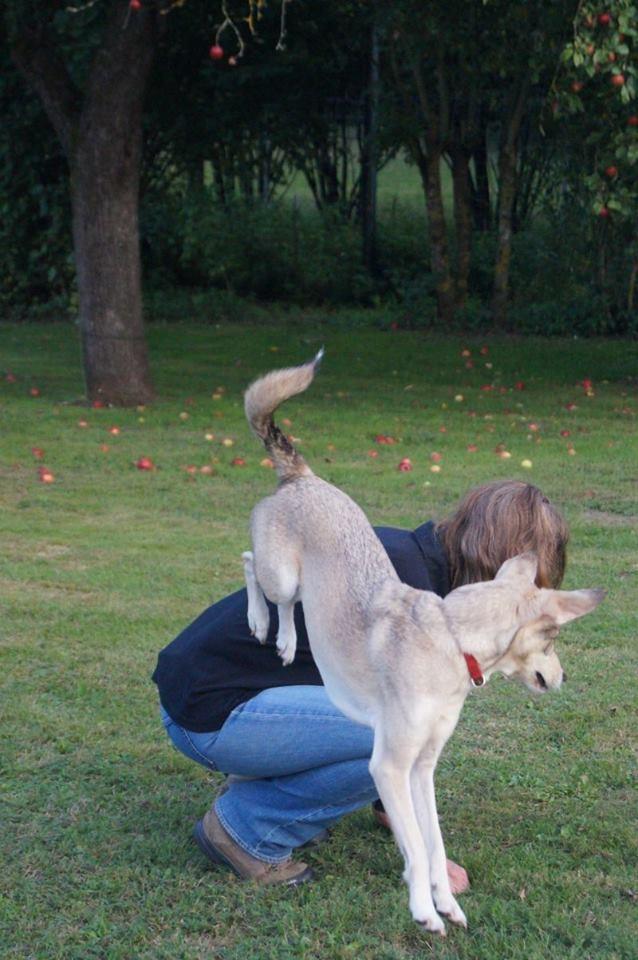 Lucy, Sprung über den Rücken