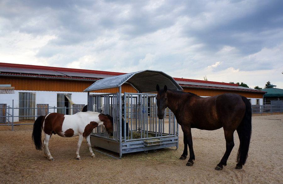 Pferde auf dem Zeitlhof in Probstberg bei Wenzenbach