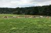 Pferde auf Weide Riverside Ranch