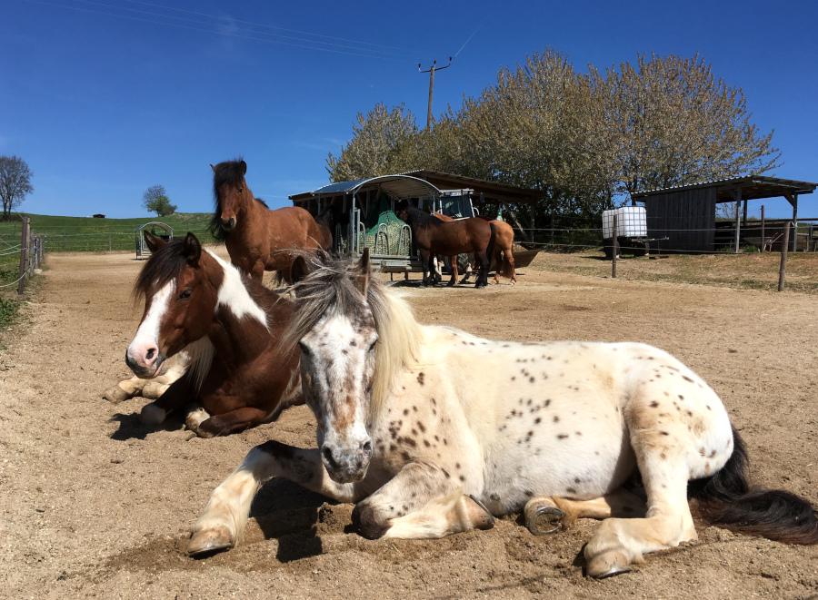 Pferde auf Paddock