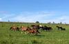 Pferde auf Wiese am Birkenhof
