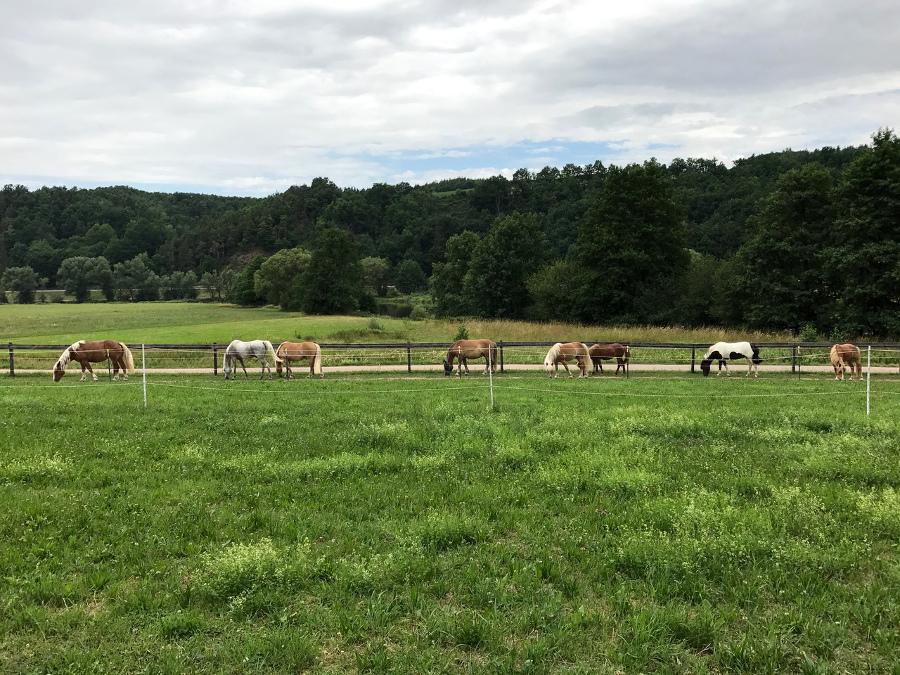Pferde auf der Riverside Ranch, Reichenbach