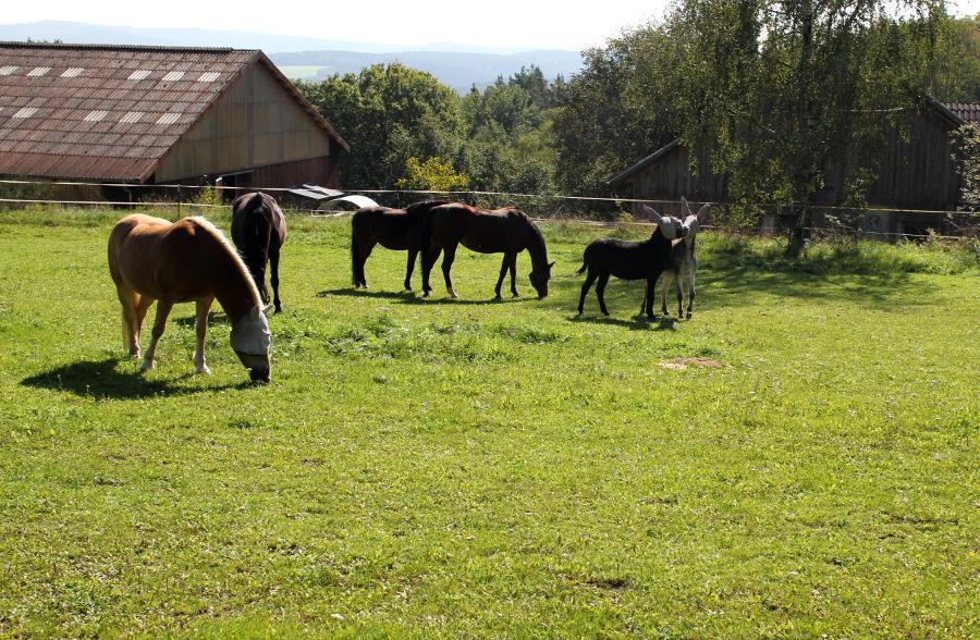 Pferde und Esel in Steinrinnen bei Bernhardswald
