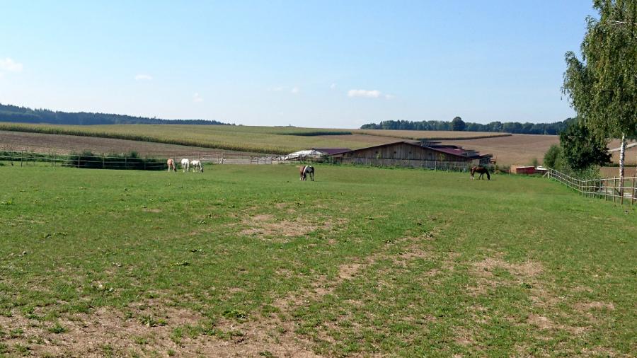 Pferde auf Koppel in Obersanding