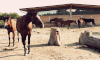 Pferde auf dem Koppelgelände in Griesau