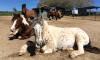 Pferde in Liegefläche auf der Crazy Riders Ranch