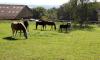 Pferde auf Koppel in Steinrinnen