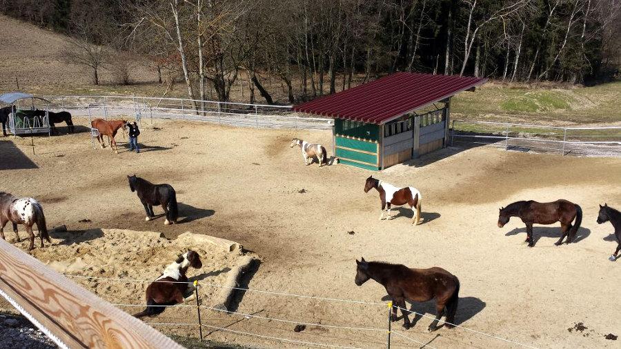 Pferde im Aktivstall Strahl