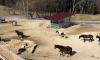 Pferde und Raufe im Aktivstall Strahl