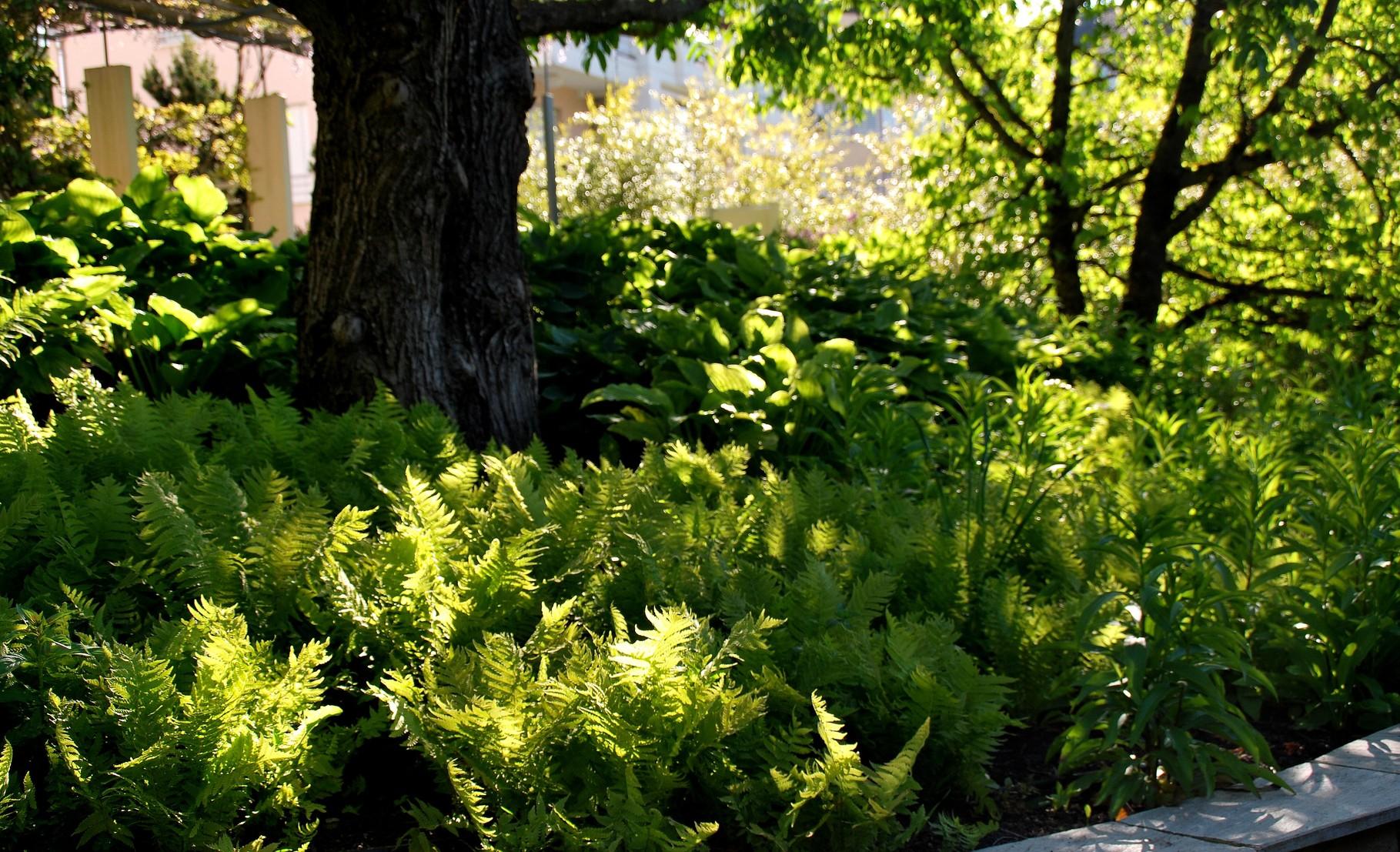 Entretien de jardins jardin vivace for Entretien jardin 16