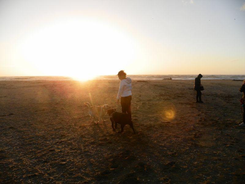 spielen mit ital. Hunden am Strand