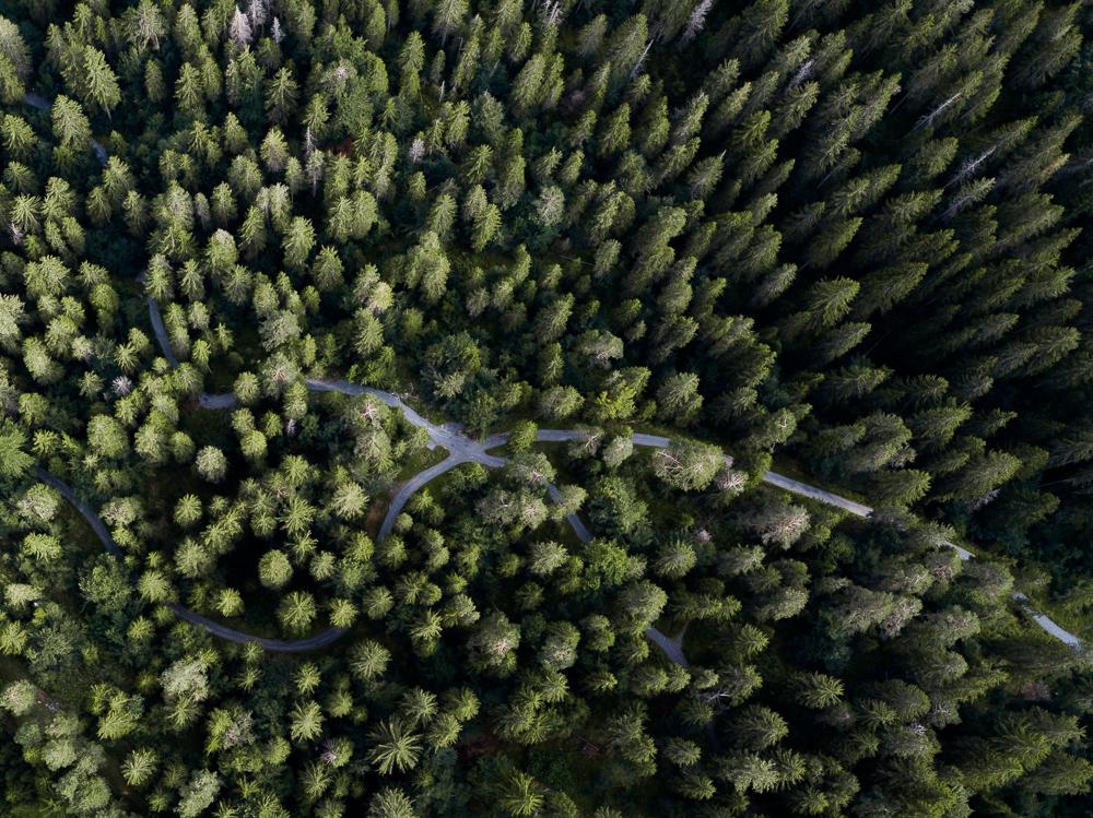 Drohenaufnahme im Wald