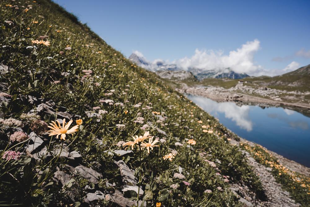 Glattalpsee mit Blumen
