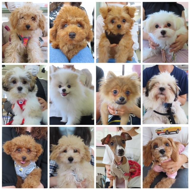 パピーパーティ-開催しました(10/3)【ALOHA塾】  犬のしつけ教室@アロハドギー