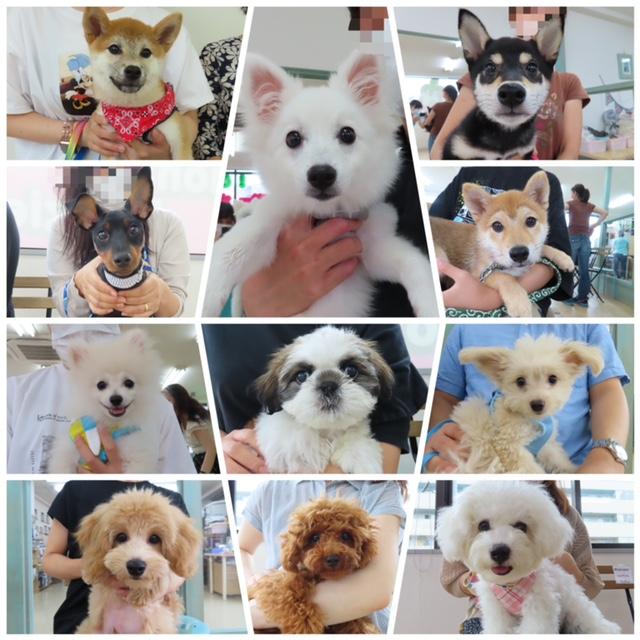 パピーパーティ-開催しました(7/4)【ALOHA塾】  犬のしつけ教室@アロハドギー