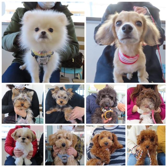 パピーパーティ-開催しました(1/10)【ALOHA塾】  犬のしつけ教室@アロハドギー