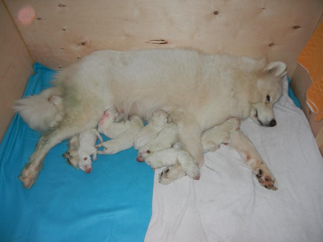 Nach der Geburt haben alle ihren wohl verdienten Schlaf