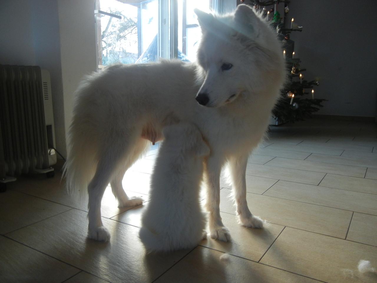 Mama und Welpe