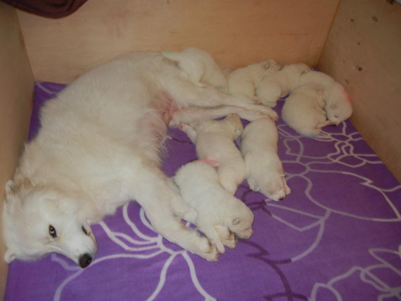 Mama Shyra und ihre Rasselbande schlafen