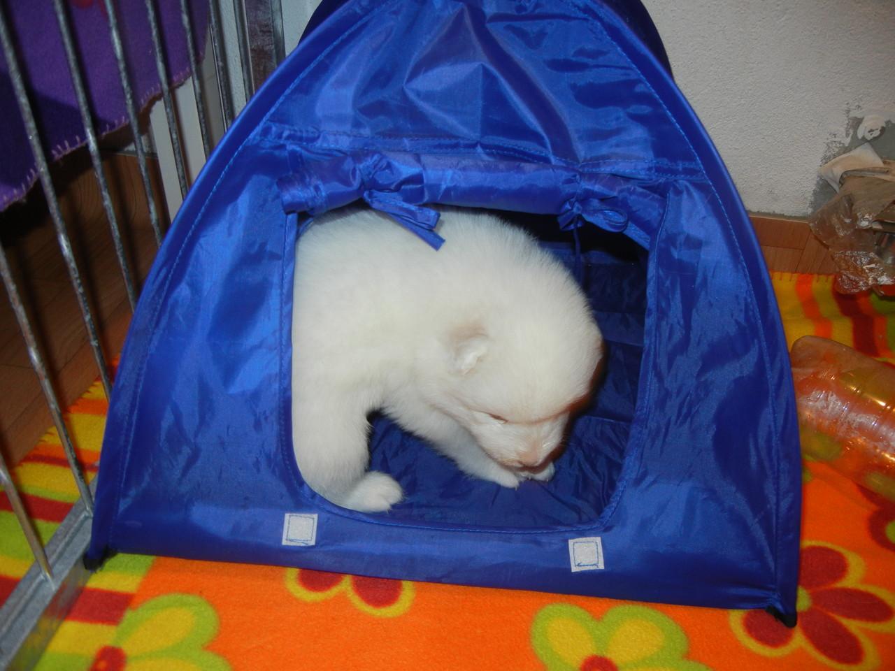 Hündin blau und das Zelt