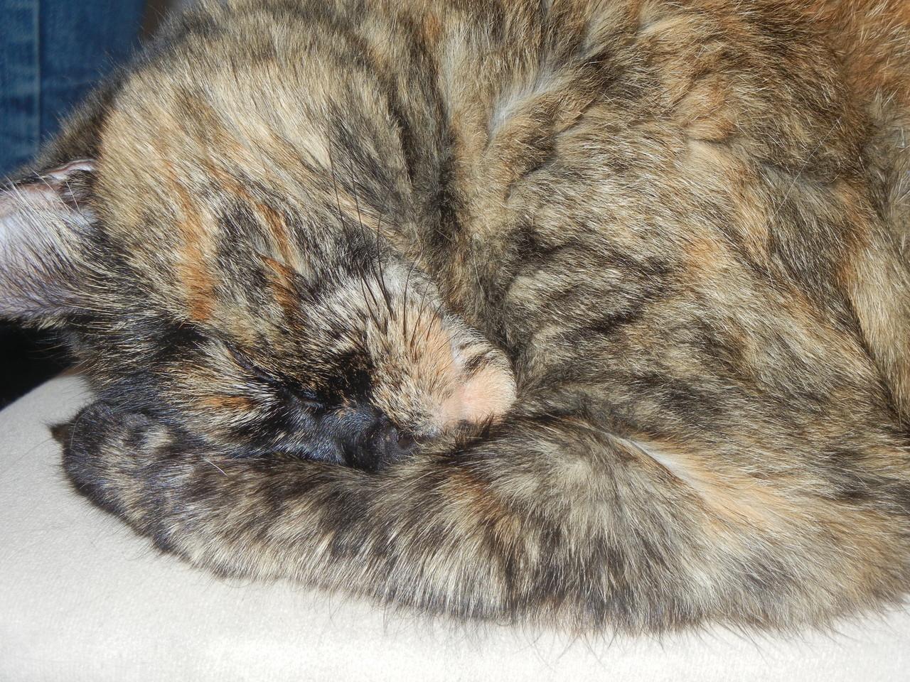 Katze Saphira erholt sich von uns