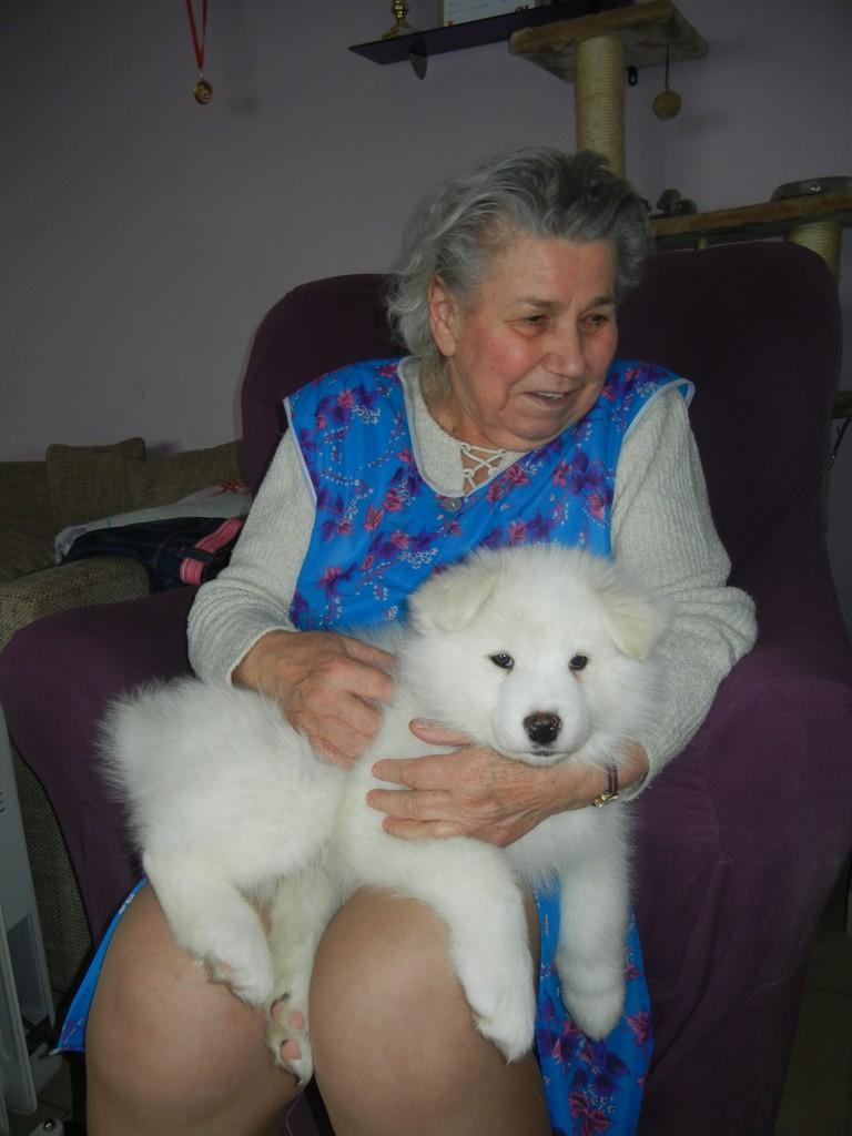 Hündin weiß (Tenya) wird von der Oma des Hauses gekuschelt