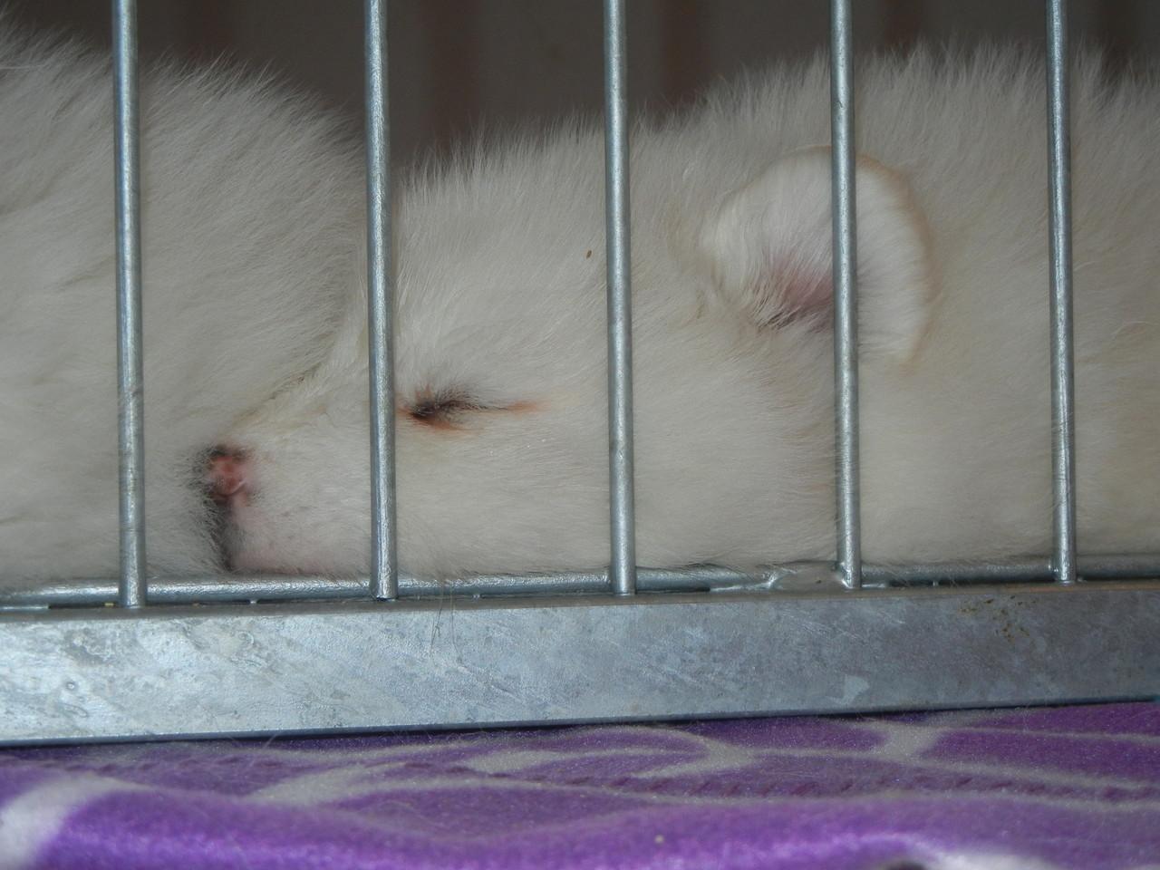 Seeliges schlafen