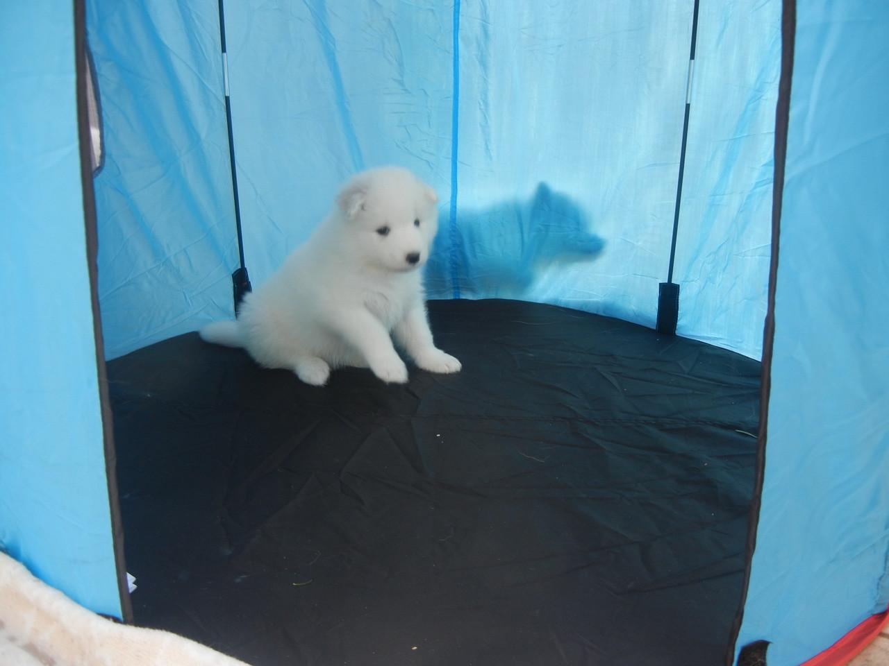 Irgendeiner schleicht da hinter dem Zelt umher