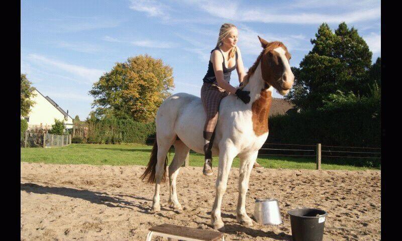 Es ist vollbracht.. Lano hat das erste mal Reitergewicht auf seinem Rücken!
