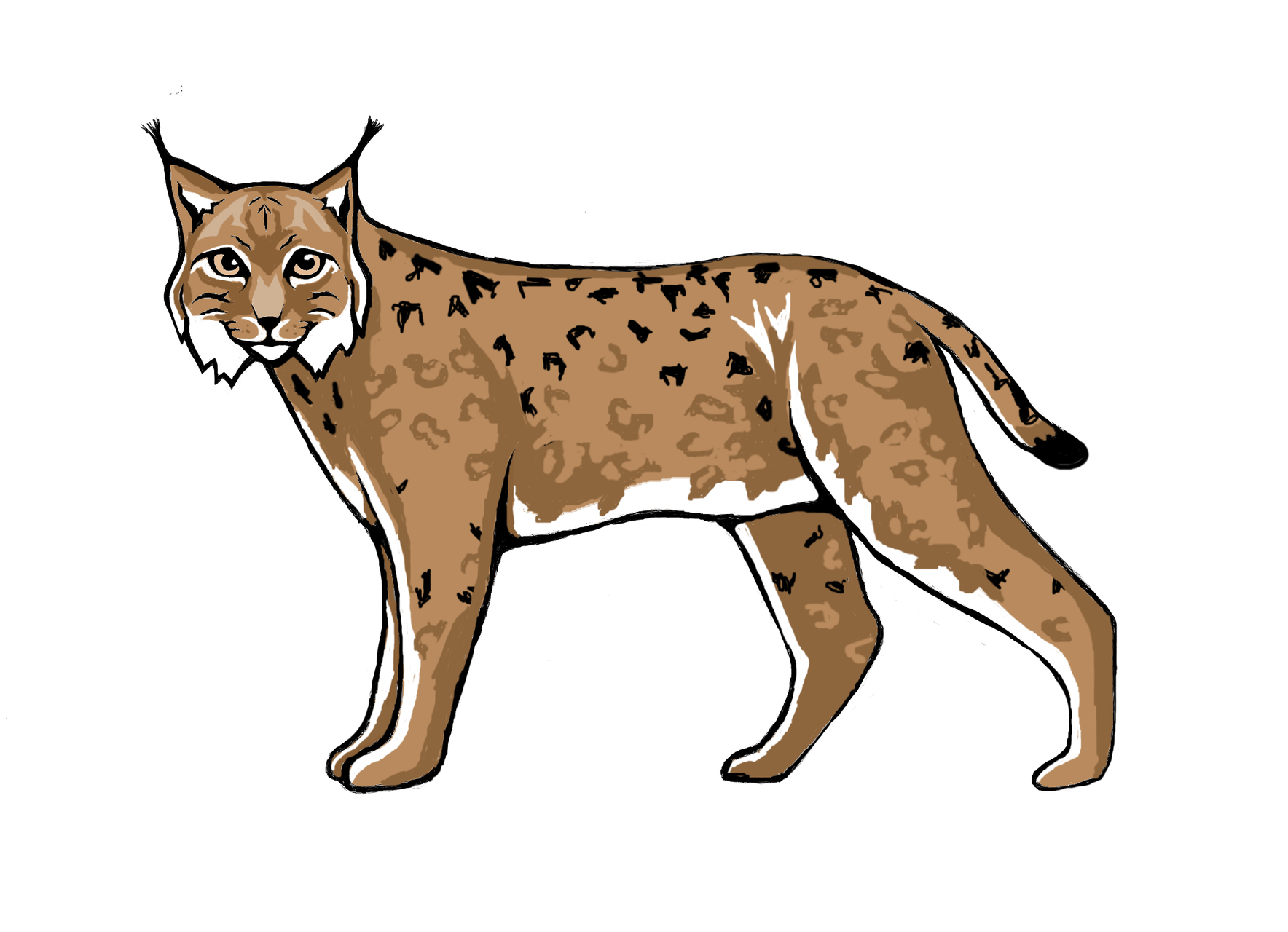 Game topic - lynx and wildcat reintroduction - where does the lnxy live and what supports/endangers it?