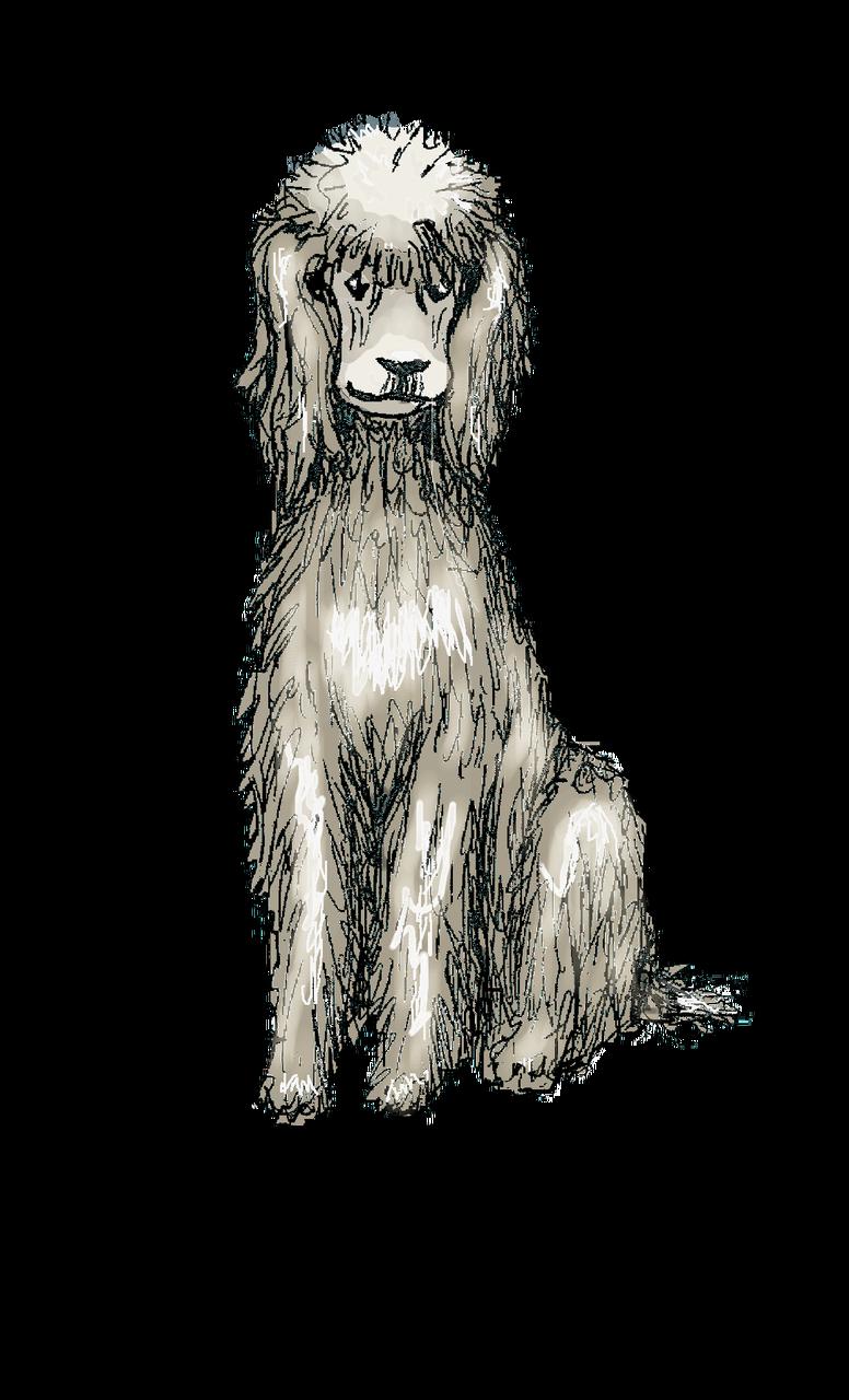 Poodle Frida Findeviel