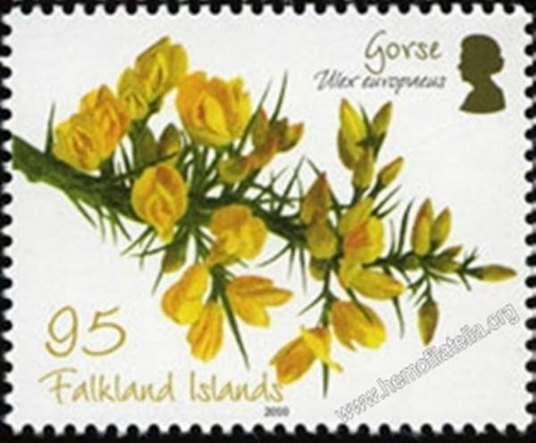 Ulex europaeus. Islas Malvinas.