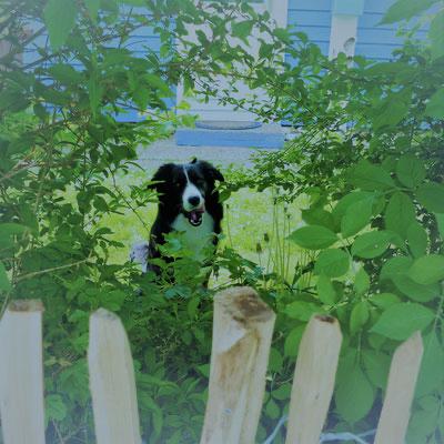 eingewachsener, eingezäunter Garten