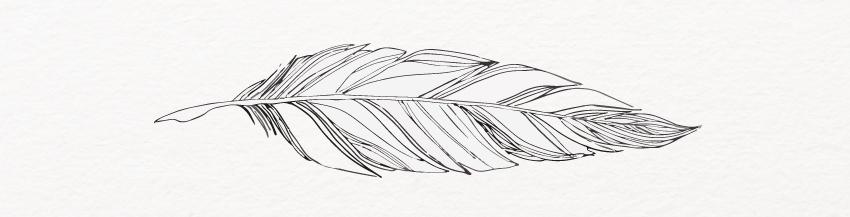illustration d'une plume qui symbolise la création