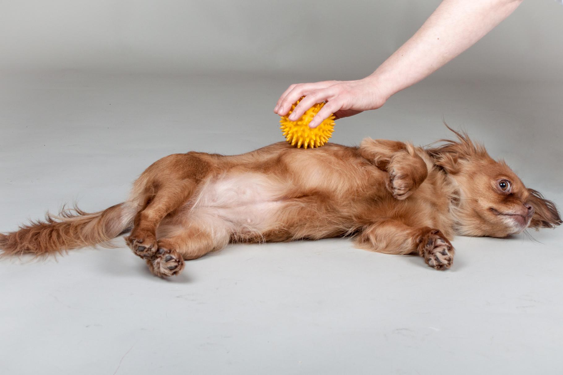 Igelballmassage