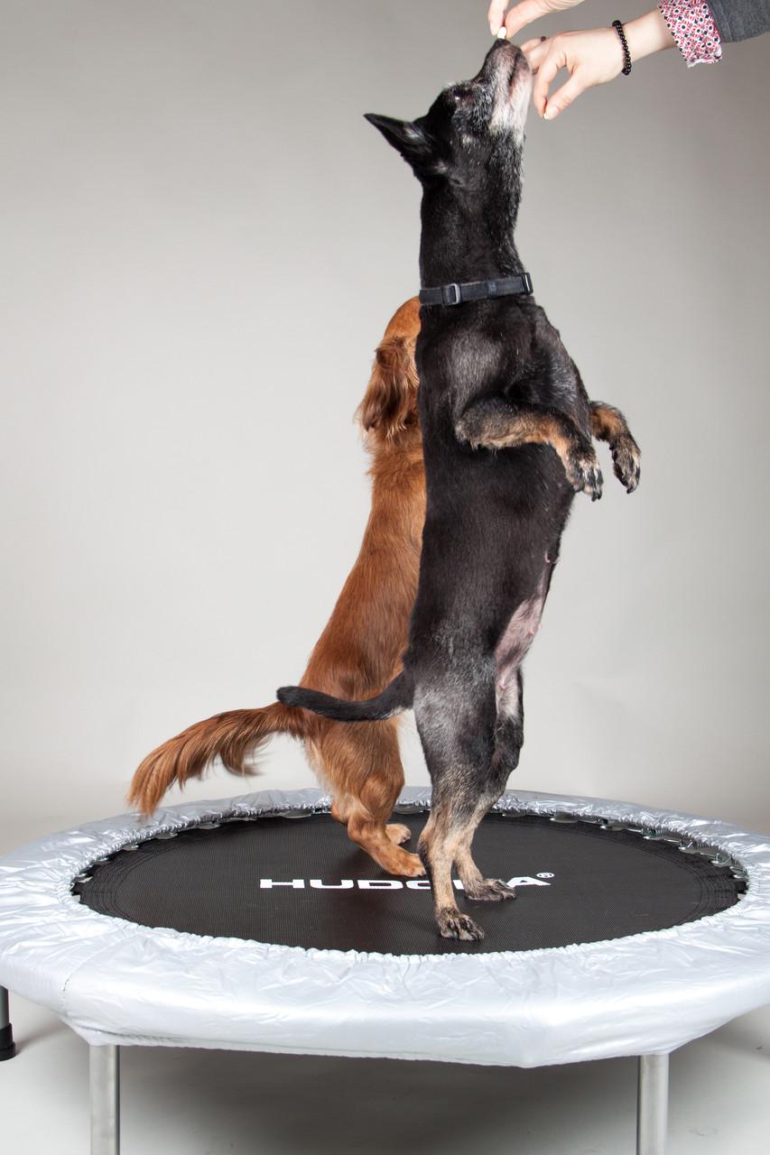 Gleichgewichtstraining