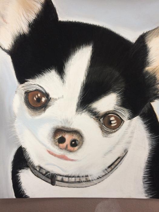 portrait de chihuahua