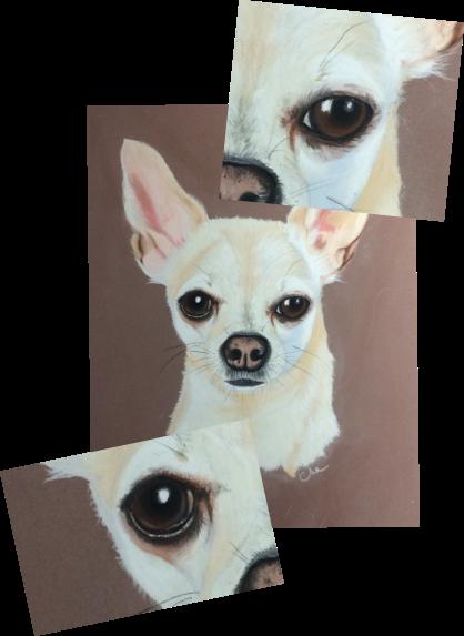 commande de portrait animalier