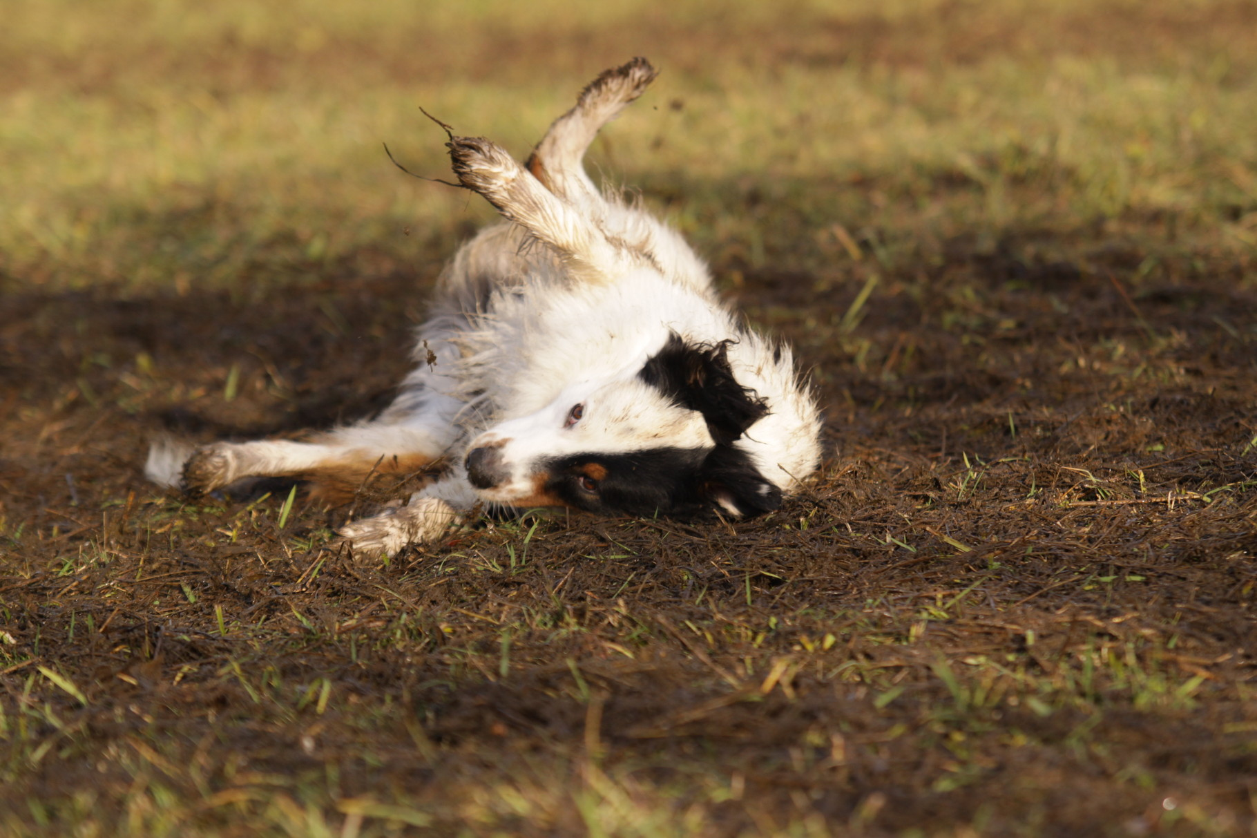 Blog Hundeschule Pfullingen