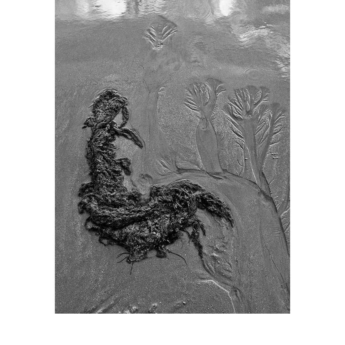 Dessins d'eau © Photographie : Michel Ducrot
