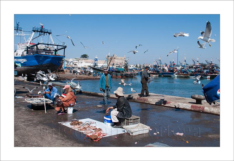 Essaouira, Marruecos, pescadores, mercado, venta de pescado, gaviotas, puerto, puerto pesquero, barcos, fotografía de viajes, turismo, fotografía callejera, street photograph