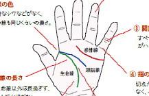 手の線は健康状態を表しています