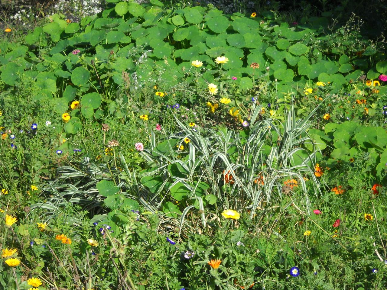 prairie fleurie gite ecologique Aisne