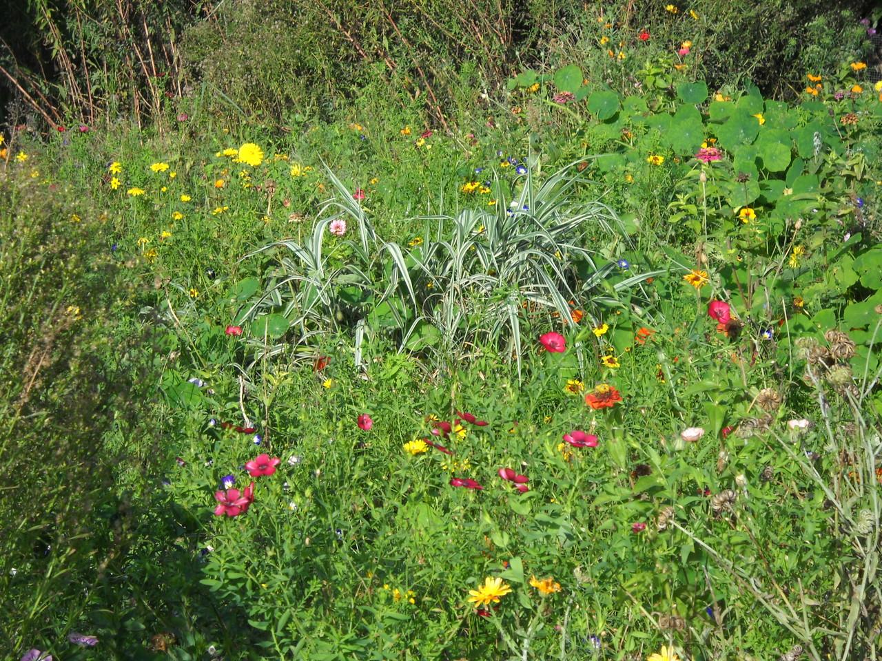 prairie fleurie gite ecologique Thierache