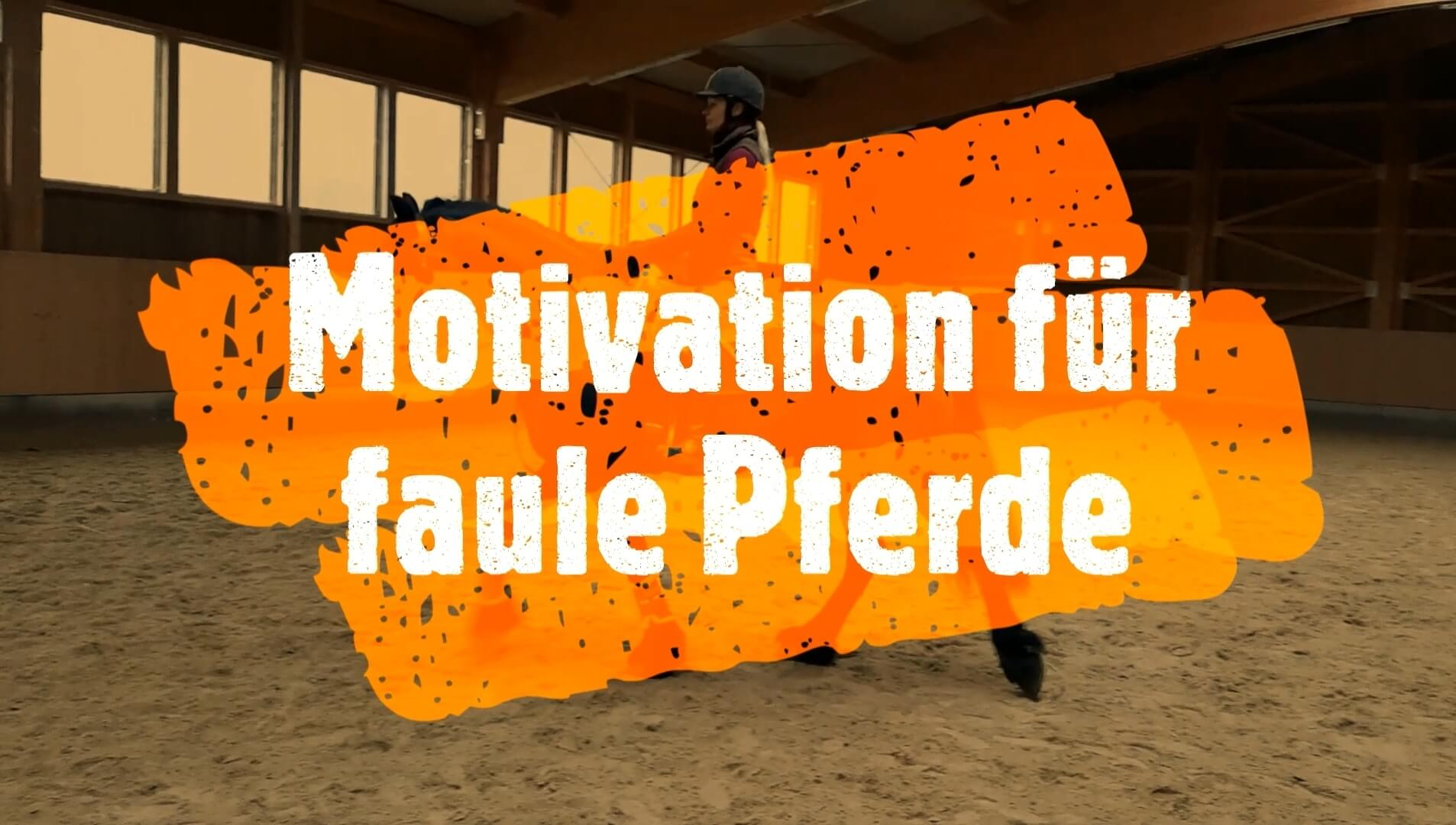 Motivation für faule Pferde