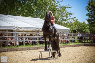 Vorschaubild Pferdeausbildung
