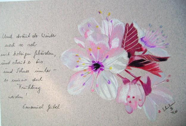 Japnische Pflaumenblüte